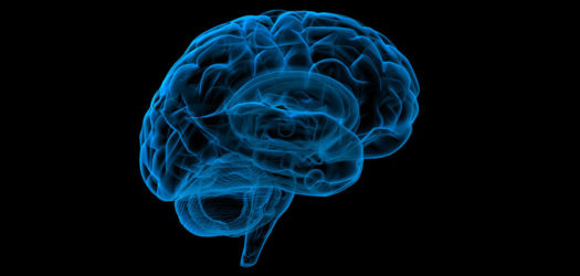 Here's Your Brain on Trauma